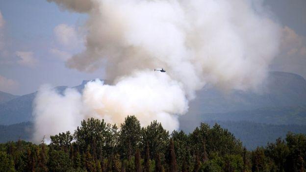 Попытки скрыть незаконную вырубку с помощью спровоцированных лесных пожаров. Что происходит в сибирских лесах
