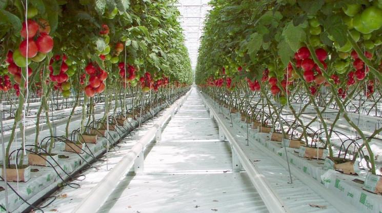 Производители овощей на открытом грунте могут получить гранты от USAID