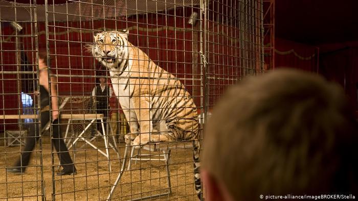 Украина запрещает использование животных в цирке